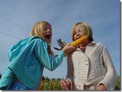 corn maze 2008 018