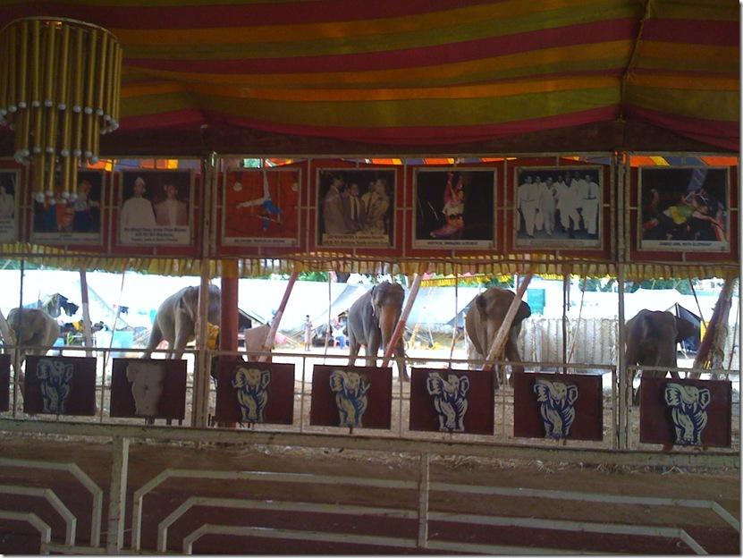 Circus 016