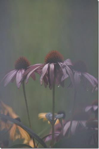 Rachel's flower