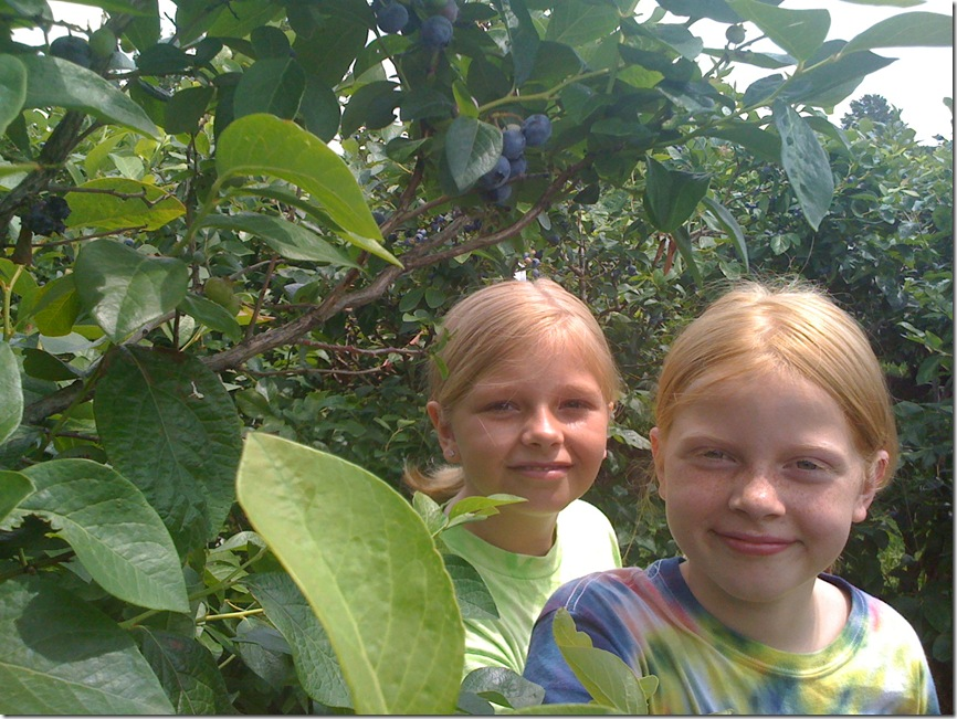 Blueberry Picking 039