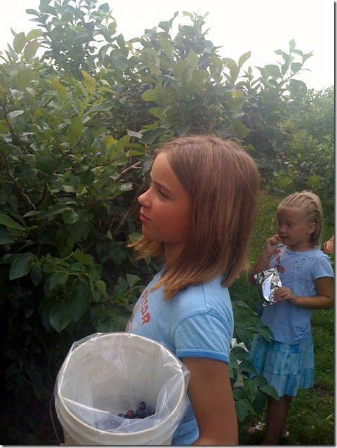 Blueberry Picking 041