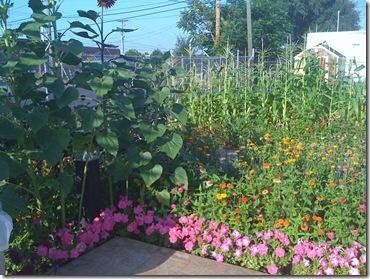 Beach and Homeless Center Garden 036