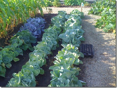 Beach and Homeless Center Garden 038
