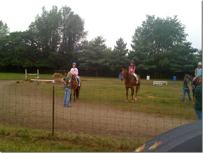 Horses 064