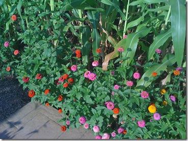 Beach and Homeless Center Garden 043